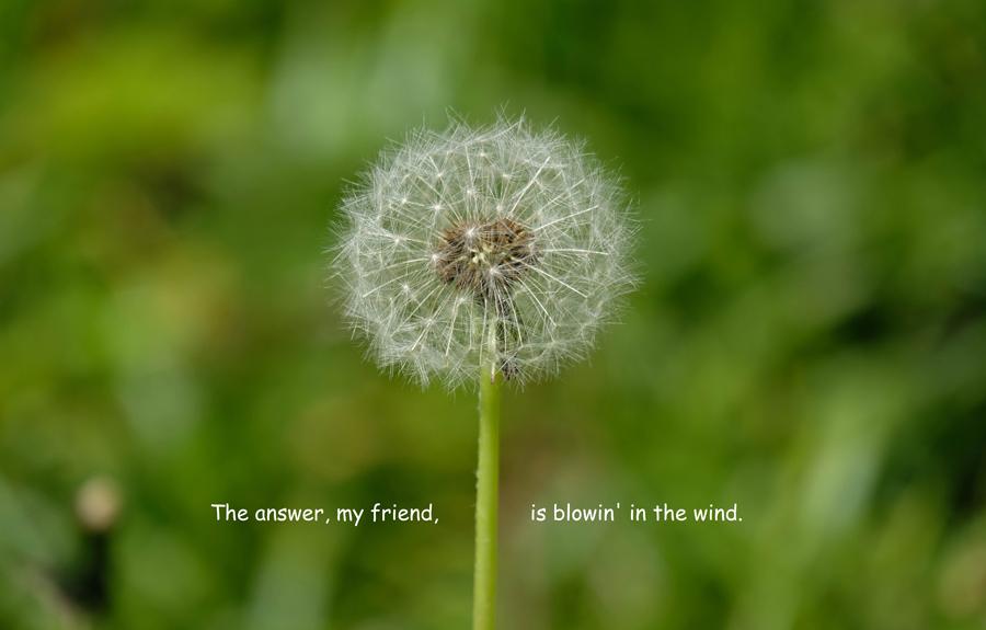 Das Leben ist eine Pusteblume